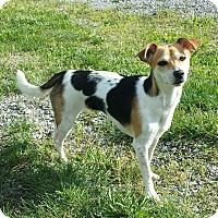 Adopt A Pet :: Lucy - Plainfield, IL