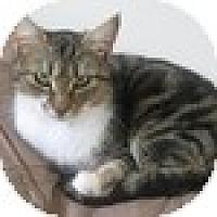 Adopt A Pet :: Mimi - Vancouver, BC