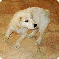 Adopt A Pet :: CLARK - Glastonbury, CT