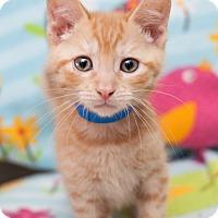 Adopt A Pet :: Cooper - Shelton, WA