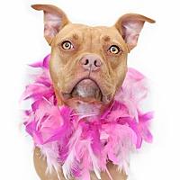 Adopt A Pet :: Risa - Orlando, FL