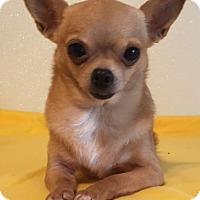 Adopt A Pet :: Honey # 2 - Dallas, TX