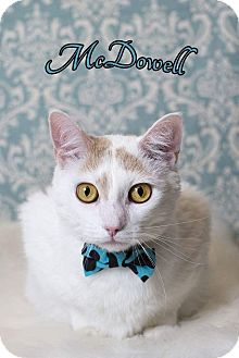 Domestic Shorthair Cat for adoption in Tega Cay, South Carolina - McDowell