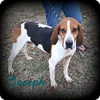 Adopt A Pet :: Joseph - Denver, NC