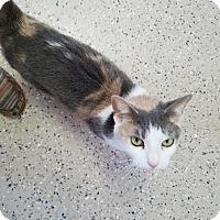 Adopt A Pet :: Spacey - China, MI