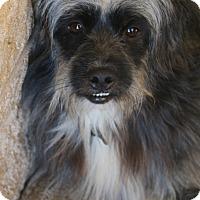 Adopt A Pet :: Ragsdale - Bedminster, NJ