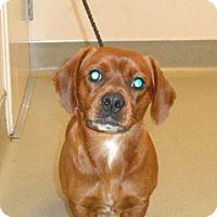Adopt A Pet :: Jeremy - Wildomar, CA