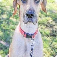 Adopt A Pet :: Lexi - Pipe Creed, TX