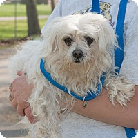 Adopt A Pet :: Zuko - New Martinsville, WV