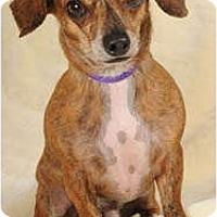 Adopt A Pet :: Moe - Johnsburg, IL