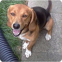 Adopt A Pet :: Milo - Indianapolis, IN