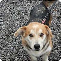 Adopt A Pet :: Bailey - Murfreesboro, TN