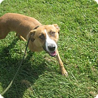 Adopt A Pet :: #379-17 @ Animal Shelter - Zanesville, OH