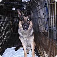 Adopt A Pet :: Rex - Cornwall, ON