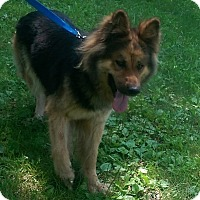 Adopt A Pet :: Willow - Antioch, IL