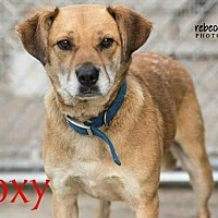 Adopt A Pet :: Roxy - Crandall, GA