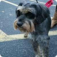 Adopt A Pet :: Lizzie-ADOPTION PENDING - Bridgeton, MO