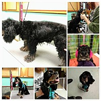 Adopt A Pet :: Sully - Nicholasville, KY