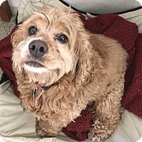 Adopt A Pet :: Lani - Newell, IA