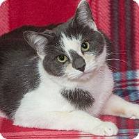 Adopt A Pet :: Lexi - Elmwood Park, NJ