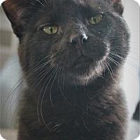 Adopt A Pet :: Kansas - Richand, NY