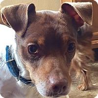 Adopt A Pet :: Jack - MINNEAPOLIS, KS