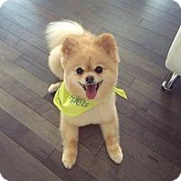 Adopt A Pet :: Boomer - Edmonton, AB