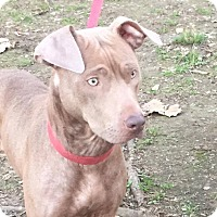 Adopt A Pet :: Lady - Beacon, NY