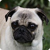 Adopt A Pet :: LOIS - Newport Beach, CA