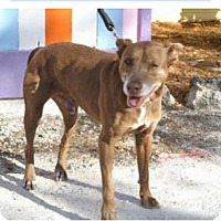 Adopt A Pet :: Papi - Englewood, FL