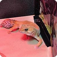 Adopt A Pet :: Petunia - Burlingame, CA