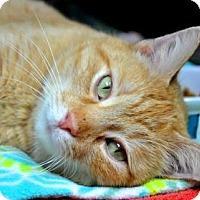 Adopt A Pet :: Ryder - Northbrook, IL