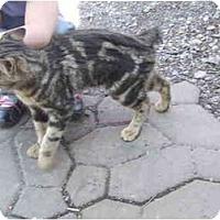 Adopt A Pet :: Sweetest BOY - Maxwelton, WV