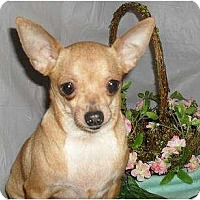 Adopt A Pet :: Penny - Chandlersville, OH