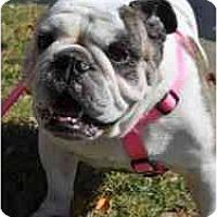 Adopt A Pet :: Honey - Winder, GA