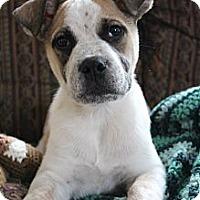 Adopt A Pet :: Winston  15 lbs - Marlton, NJ