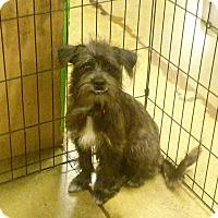 Adopt A Pet :: Wally - Miami, FL