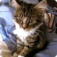 Adopt A Pet :: Rainy - Kirkwood, DE