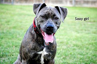 American Pit Bull Terrier Mix Dog for adoption in Denton, Texas - Sassy