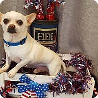 Adopt A Pet :: Peanut - Acushnet, MA