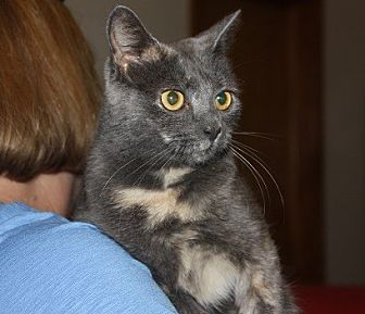 Domestic Shorthair Cat for adoption in Allentown, Pennsylvania - Tink