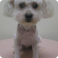 Adopt A Pet :: Teddy - Gary, IN