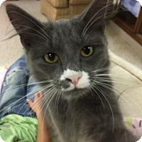 Adopt A Pet :: Mouse - Medina, OH
