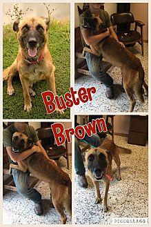 German Shepherd Dog Mix Dog for adoption in Ravenna, Texas - Buster Brown