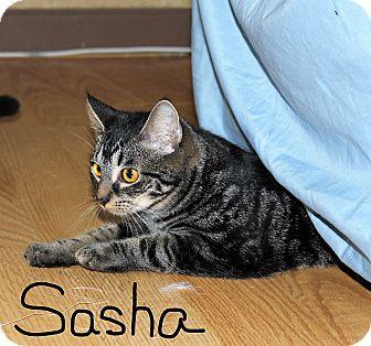 Domestic Shorthair Cat for adoption in Jesup, Georgia - Sasha