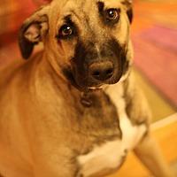 Adopt A Pet :: Penny - Lyles, TN