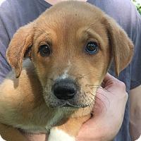 Adopt A Pet :: Mikey - SOUTHINGTON, CT