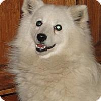 Adopt A Pet :: Winter - Columbus, IN