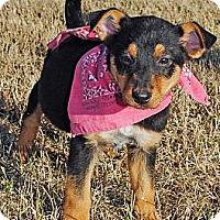Adopt A Pet :: Nikki - Gonzales, TX