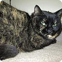 Adopt A Pet :: Shelbie - Norwich, NY